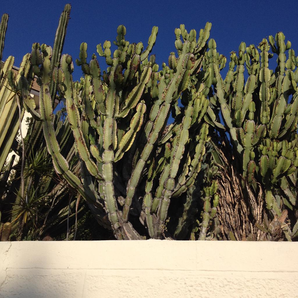 Cacti_print